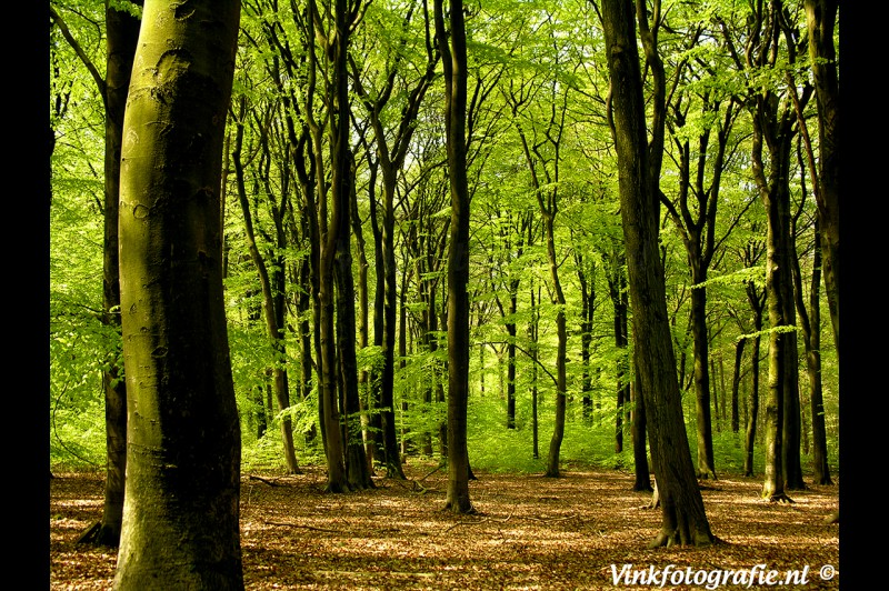 Warnsborn-park-Arnhem